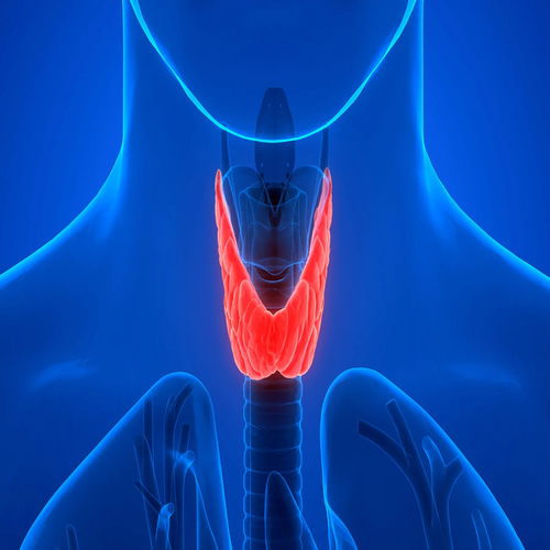 Thyroid Condition-body hairloss